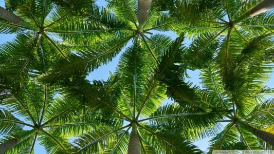palm_trees_2-wallpaper-960x540.jpg